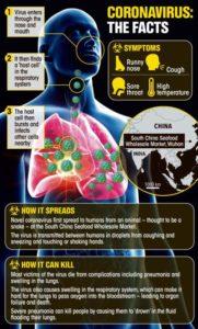 corona-virus-facts-info-graphic